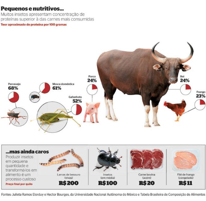 Entomofagia - Alimentação por insetos - Chef Andreia Pimentel